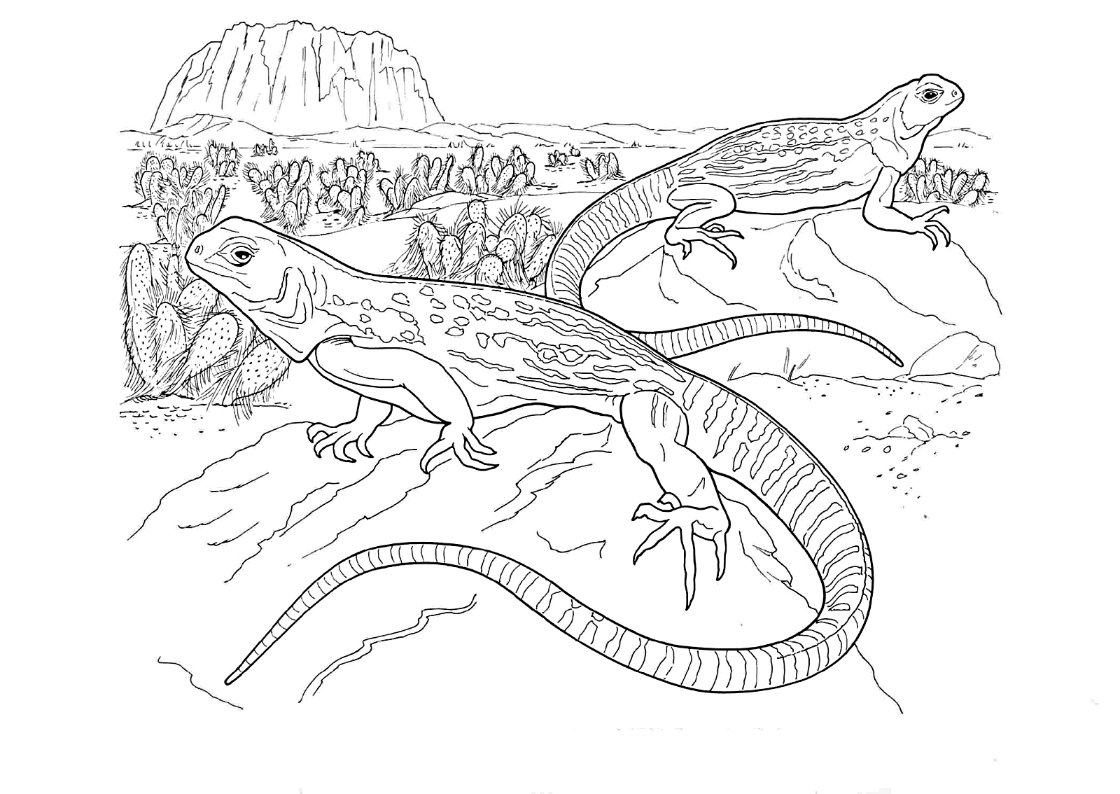 Iguana coloring pages to download